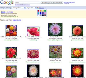 normal_search_dahlia