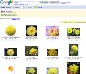 search_dahlia_yellow_filter