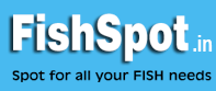 fishspot.in